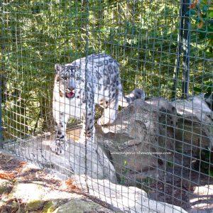La Bérangerie Chenonceaux chambres d'hôtes et gîte Zooparc de Beauval